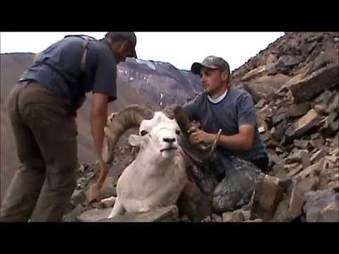 Hunting Dall Sheep, Caribou, Moose with Arctic Red River Outfitters, NWT, Canada #5