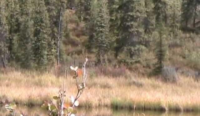 Jolene's Caribou hunt 2011