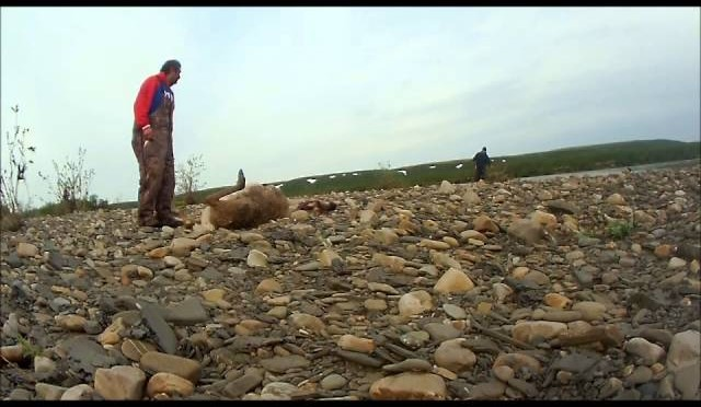 Muskrat411: caribou hunt Blow River