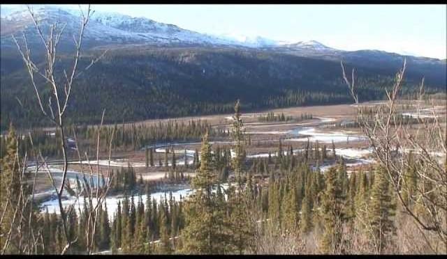 Nelchina caribou 2012-12013