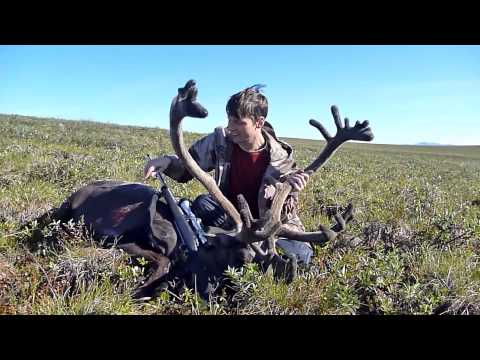 North Slope Caribou Hunt Alaska 2014