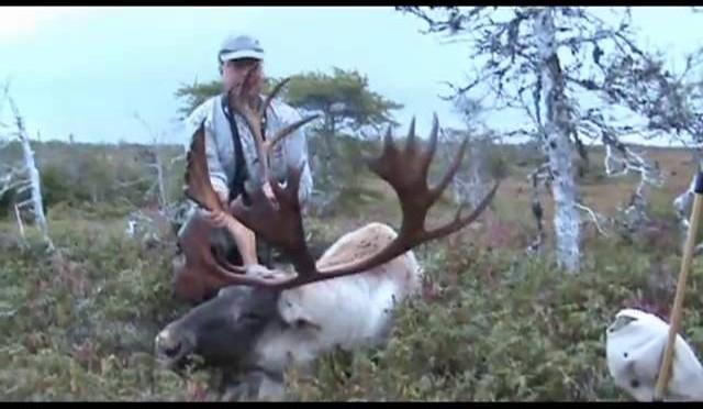 Pine Ridge Lodge, Trophy Moose, Woodland Caribou and Black Bear hunting Newfoundland, Canada