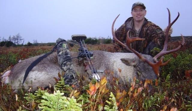 Woodland Caribou Bow hunt New Foundland Canada