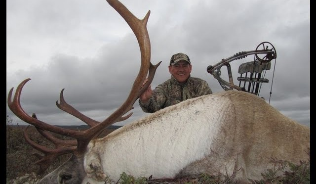 Woodland Caribou drilled and killed with a Hoyt bow using a decoy!