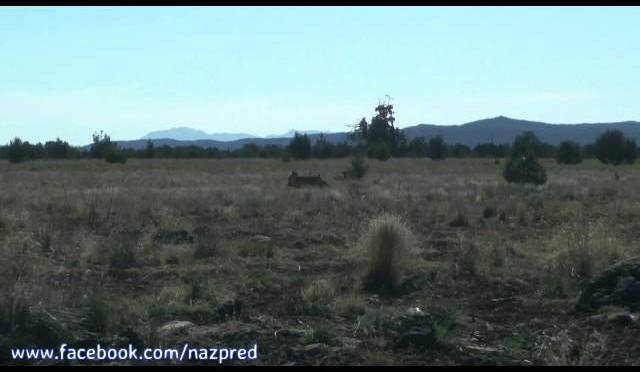 Intro – Northern Arizona Coyote Hunting