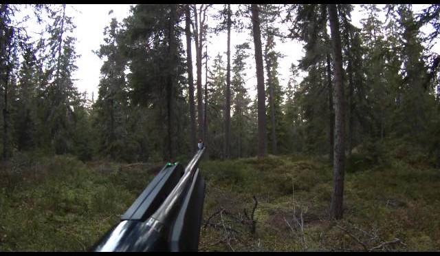 Jakt Elg-okse fall ombygd fra Ku. Hunting small moose bull.
