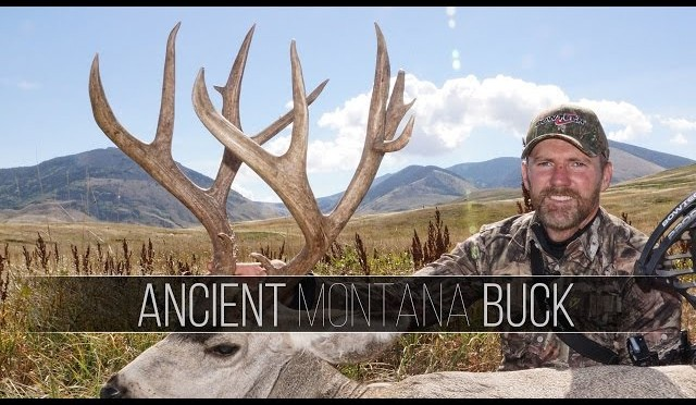 Nontypical Montana Mule Deer – Ancient Montana Muley Buck