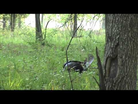 old turkey bow hunt