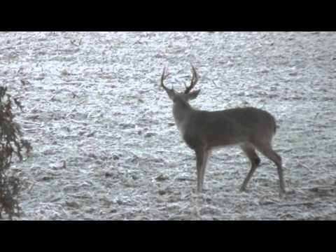 When Deer Jeer