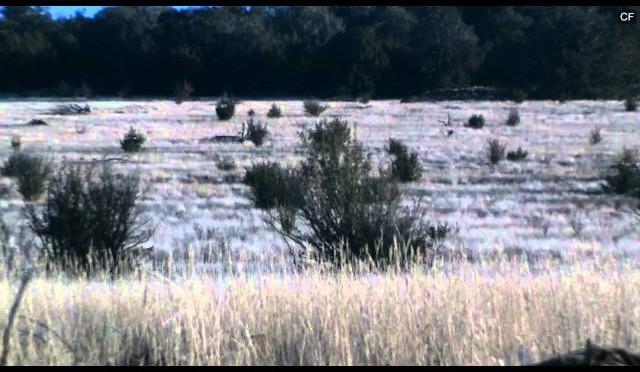 Williams AZ coyote hunting