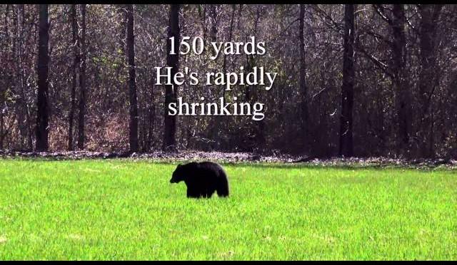 Black Bear Hunting 2016, first Bear