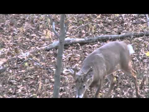 Bowhunt or Die – S2:E20 – Big Bucks Down in Illinois and Iowa!