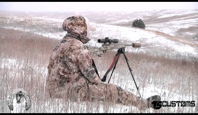 Coyote Hunting, 2 Coyotes:  Turkey Day Takeout