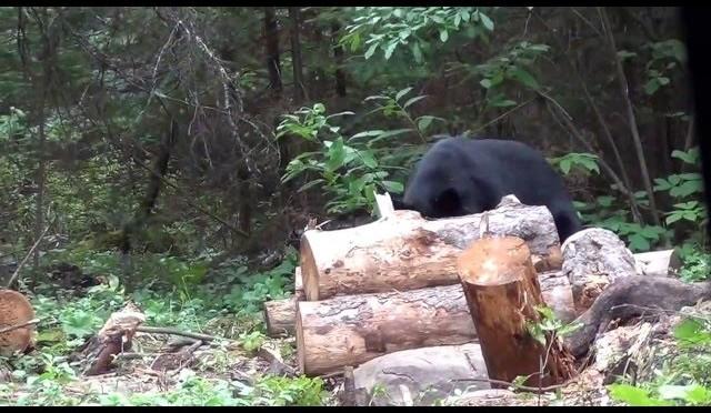 Fred Lutgers Last Bearhunt