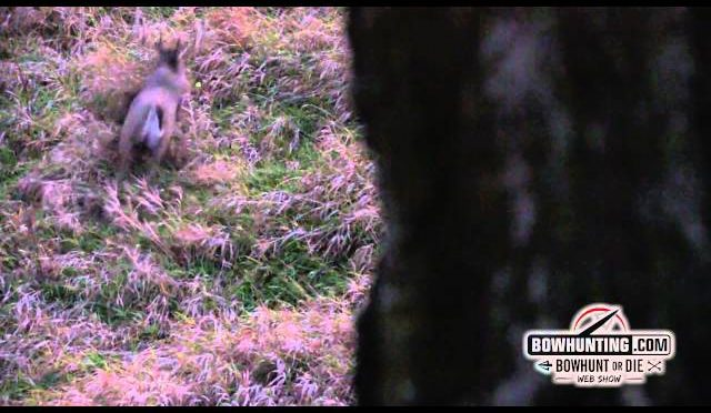 Monster Buck Goes Down on Video!