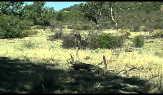 Rough Day – Williams AZ Coyote Hunting