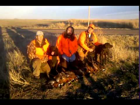 Kansas Pheasant Hunt