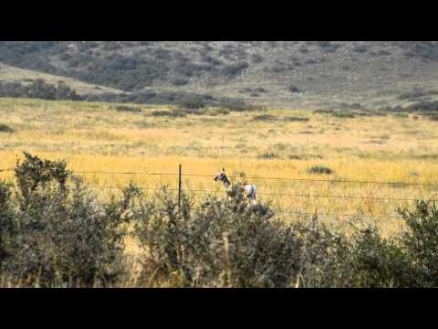 Antelope Archery Hunt Fail- Dawn Til Dusk Outdoors