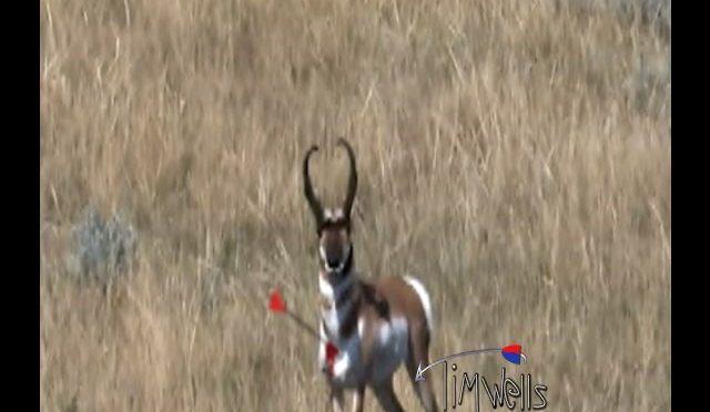 Antelope bomb drop.