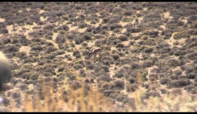 BBB 2013 Wyoming Antelope Hunt