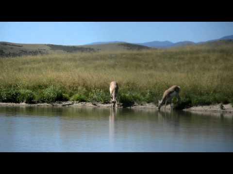 Colorado Antelope Archery Hunt Dawn Til Dusk Outdoors