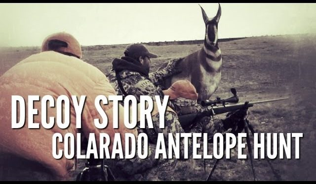 Colorado Antelope Hunt | Decoy Story