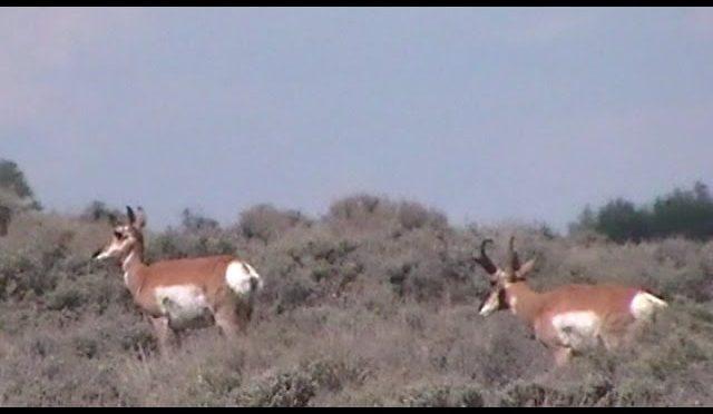 Colorado Archery Antelope Hunt 2014