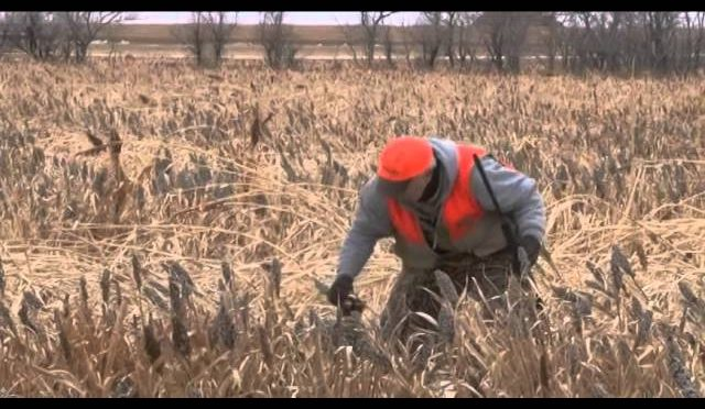 Crawford NE Antelope – 2014 Outdoorsmen Adventures