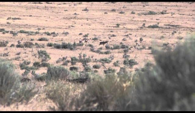 Extreme Desire TV – Antelope Hunting in Nevada with Jake Russell and Ed Boero