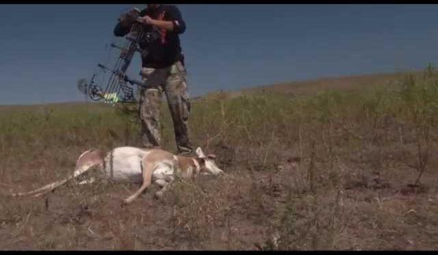 Joels Antelope hunt
