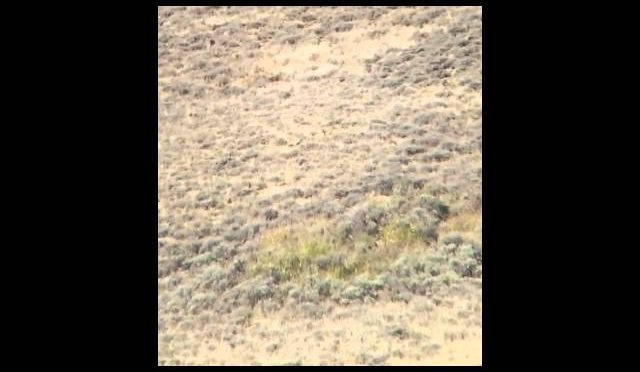 Long Range Antelope Hunting 338 Lapua 970 Yards
