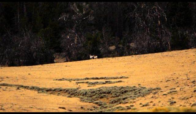 Long Range Pursuit – Wyoming Youth Antelope Hunt