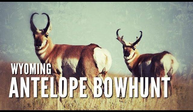 Wyoming Archery Antelope with Ron Coburn