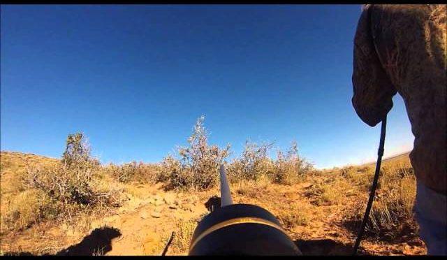 Wyoming Pronghorn Antelope Hunt 2013