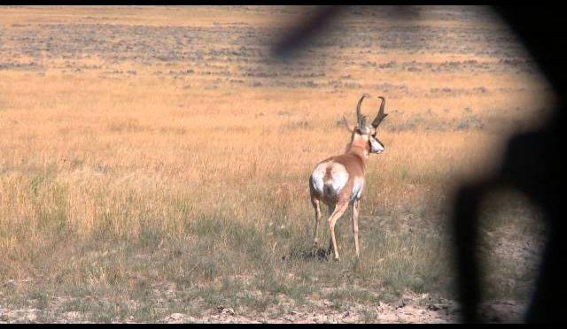 Wyoming Pronghorn Antelope Youth Hunt