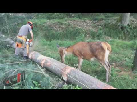Deer protects tree