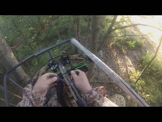 WHITETAIL HARVEST DEER HUNTS OHIO BIG DOE DOWN PSE FANG CROSSBOW HUNT  9/25/16