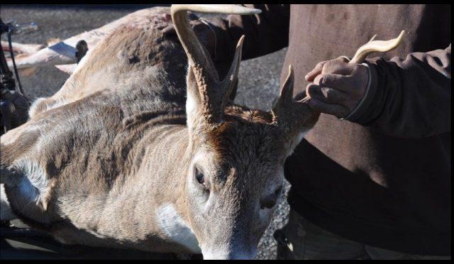 See These Deer Killed Near Doylestown Pa ...