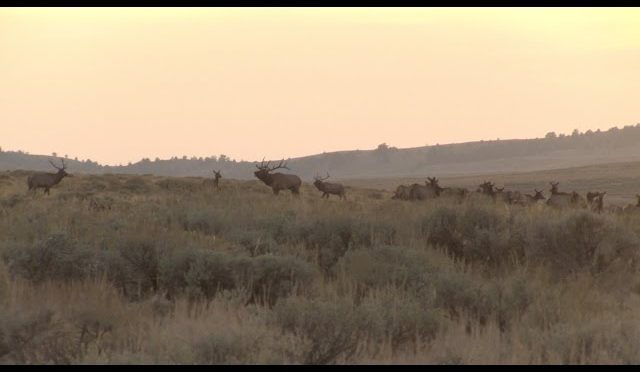 6 GUYS, 2 STATES, 12 TAGS – BOW ELK HUNTING OREGON & WYOMING
