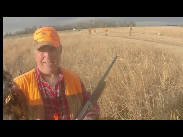 Kansas Quail And Pheasant Hunt By Kevin Dooley Dvm