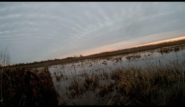 Santee Delta East WMA – Duck Hunt 1.28.17 Part 2