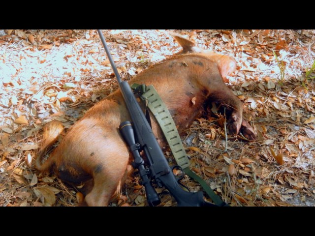 Wild Hog Hunt Near Suwanee River Huntingvideoshub Com