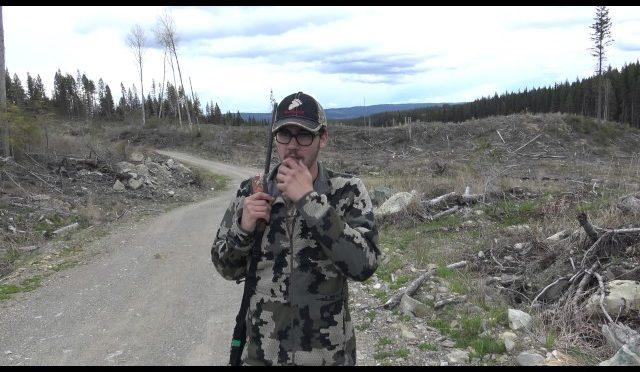 Bear hunting Spring 2017