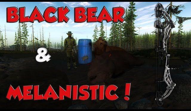 Black Bear Barrel Hunt! *RARE ELK!* THEHUNTER2017