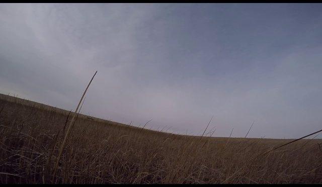 Pheasant hunting South Dakota 2016