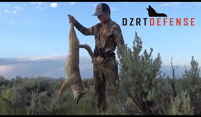 DzrtDefense Coyote Hunting: Summer Rage