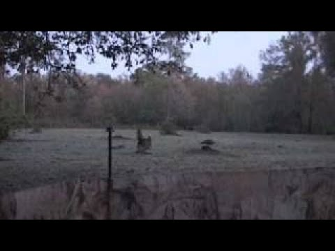 Osceola Turkey Hunt