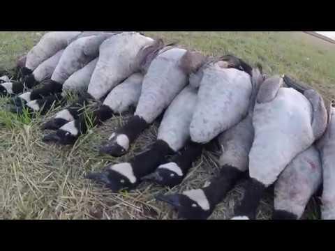 20 Bird Goose Hunt 9/30/17