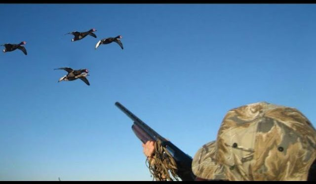 duck and pigeon hunting air shooting flying in the sky with gun like a pro