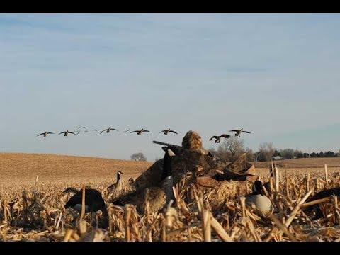 Как правильно охотиться на гусей на весенней охоте